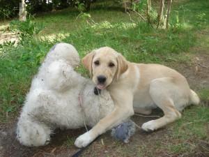 Hund und Kuscheltier