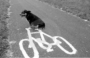 Hund und Fahrrad