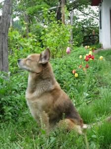 Ein aufmerksamer Hund