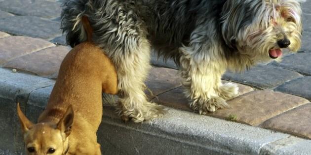 Die Begegnung Hund-Hund