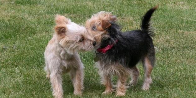 Wie Sie am besten Hunde miteinander vorstellen