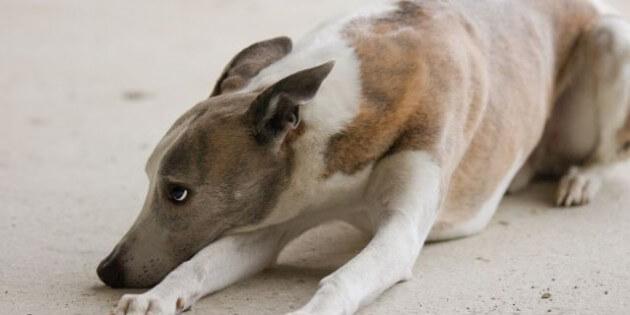 Keine Angst: Silvester-Tipps für Hund und Halter
