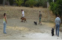 Foto Hundetraining als Gruppe