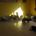 Hunde im Aufenthaltszimmer des Hundeinternats