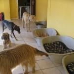Viele Hunde im Hundeinternat