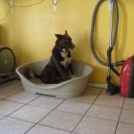 Hundeinternat Schlafbox