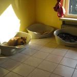 Hundeinternat Schlafzimmer