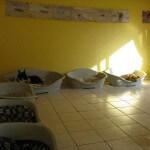 Schlafzimmer Hundeinternat Norderstedt