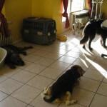 Aufenthaltsbereich und Spielzimmer im Hundeinternat