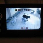 Viddeoüberwachung im Hundeinternat Norderstedt