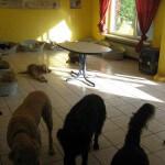 Hunde beim Essen im Hundeinternat