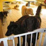 Hunde im Hundeinternat