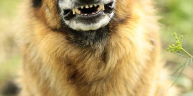 Wie man eigenständiges Verhalten beim Hund rechtzeitig erkennt