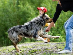 Hund beisst Frau