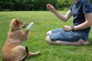 Frau trainiert mit Hund ein Hundekommando