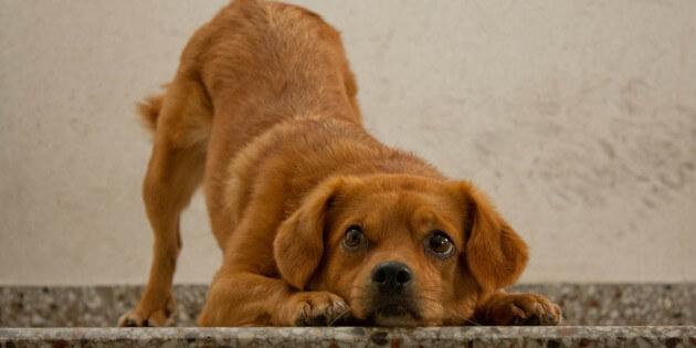Tipp des Monats – Juni 2013: Moderne Hundeerziehung – Artgerecht und ohne Gewalt