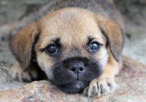 Verlorener Hund auf Facebook