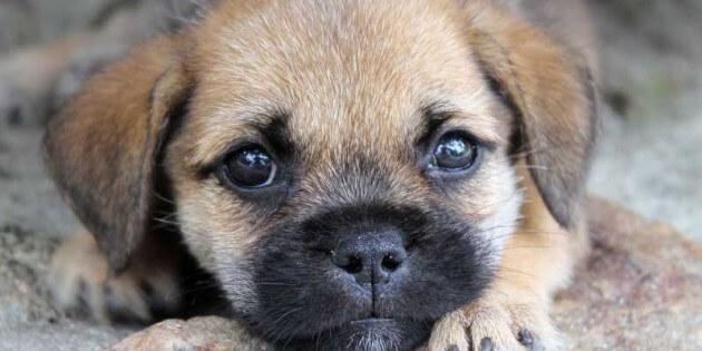 """Herrenlose Hunde auf Facebook: """"Suche neues zu Hause. Spendengelder reichen aber auch."""""""