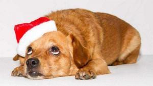 Hunde Weihnachten Weihnachtsmannmütze