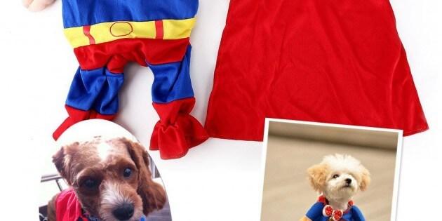 Kleidung für Hunde: Die demütigende Verkleidung