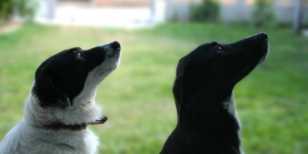 Die Ernährungslüge der Hundefutterindustrie