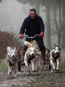 Hunde ziehen Fahrrad