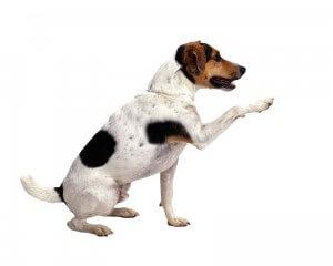 Manieren für den Hund