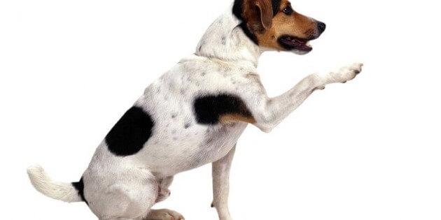 """Hilfe: Mein Hund ist toll in der """"Unterordnung"""" – ist aber nicht alltagstauglich"""