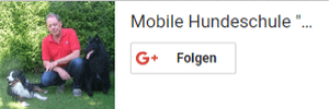 Google Plus Follow Box